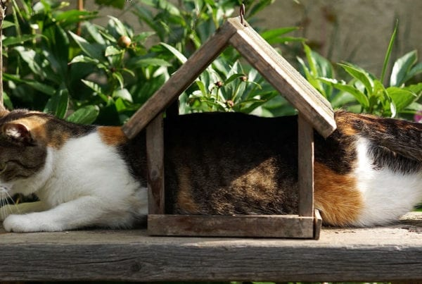 Innovative but Inaccessible header of cat laying inside bird feeder